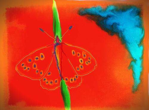 butterfly 2 copy